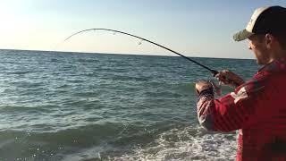 Горбыль черноморский как ловить