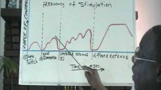 Dr. Gurley's Lecture on Muscle Summation