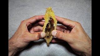l' incredibile segreto del mango, come far nascere una piantina di mango dagli scarti del frutto