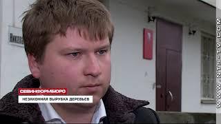 Деревья у входа на рынок «Богдановский» в Севастополе срубили незаконно