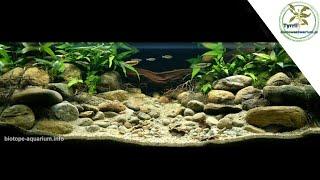 324L akwarium biotopowe. Płytka część strumienia górskiego