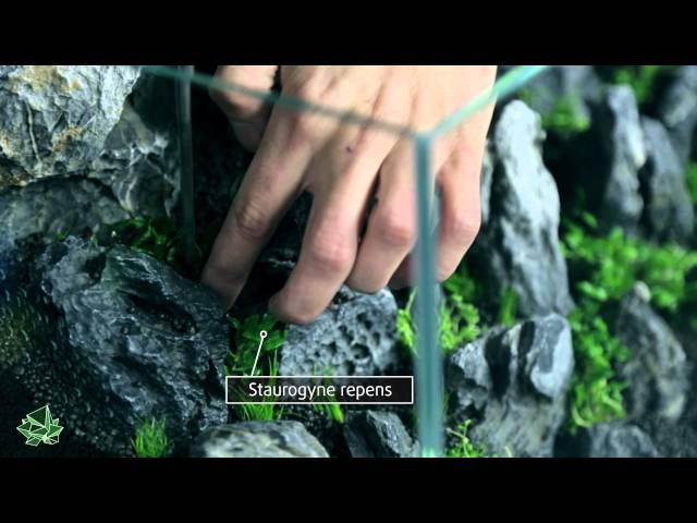 ScapingFour presents Aquascaping