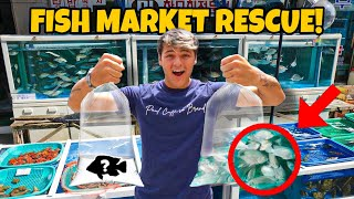 RESCUING LIVE FISH from ASIAN FOOD MARKET for BackYard POND!!