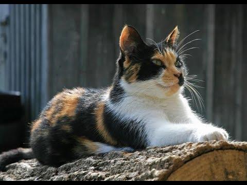 КОШАЧЬЯ МАГИЯ: Какие тайны скрывает кошка и какую кошку завести?