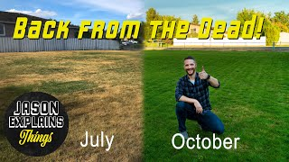 Lawn Renovation Step by Step Guide!