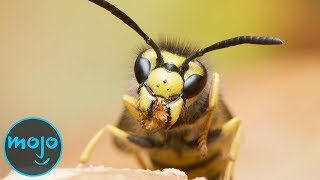 Top 10 Most Deadliest Insects
