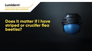 Does it matter if I have striped or crucifer flea beetles | Corteva Agriscience Canada