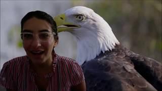 American Symbols- The Bald Eagle
