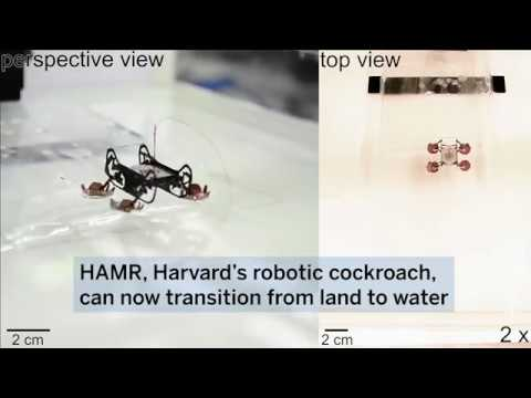 Robotic cockroach can explore underwater environments