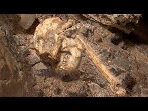 Questo scheletro di 3,6 milioni di anni è l'antenato umano più antico e completo mai visto