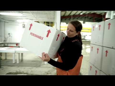 Youtube Video Still for How to Handle Your Shipment of American Lobster