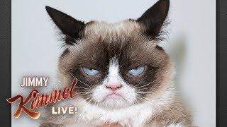 Rest In Peace Grumpy Cat