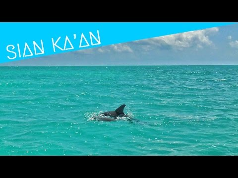 Watch wild dolphins at Mexico Sian Ka'an – World Wanderista