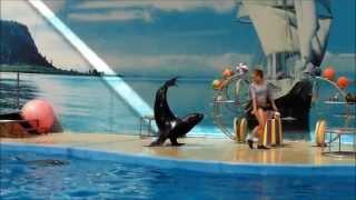 дельфинарий Немо в Анапе 2013