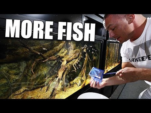 Adding the fish WE forgot about!
