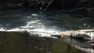 <b>Linda Waterfall</b> Sings Way Of Beauty