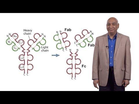 Cancer que es y como se produce