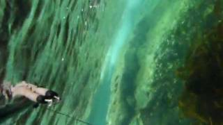 Pescasub en Galicia. Sargo al agujero