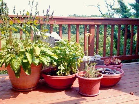 Комнатные растения на ОТКРЫТОМ ВОЗДУХЕ. Можно ли выносить, как ухаживать