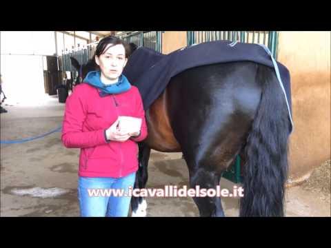 Effetti collaterali di attivatore di cavallo