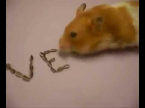 Chú chuột xếp chữ cực ngộ