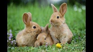 Кролики едят мандарины и апельсины