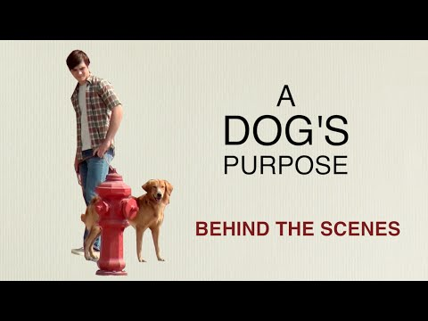 """A Dog's Purpose"": Behind the Scenes with Britt Robertson, K.J. Apa, Josh Gad, Lasse Hallstrom"