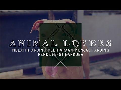 Animal Lovers: Melatih Anjing Peliharaan Menjadi Anjing Pendeteksi Narkoba