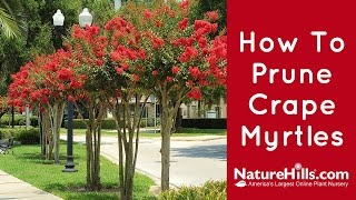 How To Prune Crape Myrtles Without Murdering Them | NatureHills.com