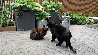 Catio Tour I Cat Enclosure I Inner City | Scandinavian