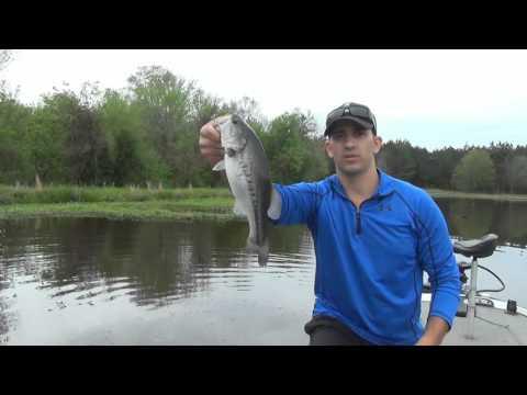 Lake trout at ang kanilang mga parasito