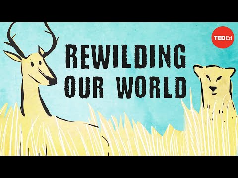 From the top of the food chain down: Rewilding our world – George Monbiot