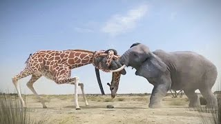 best Fight between elephant and giraffe for water