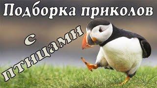 Приколы с птицами | Веселые птицы | Смешные птицы