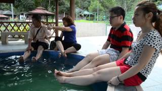preview picture of video 'Poring Hot Spring & Nature Reserve, Sabah'