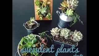 多肉植物かわいい簡単アレンジvlog#6