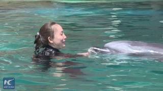 What Does Dolphin Trainer Have To Suffer