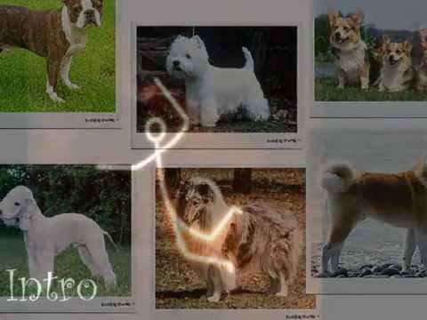 Video of World Dogs Quiz