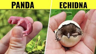 10 Newborn Animals That Look Way More Different Than You'd Expect
