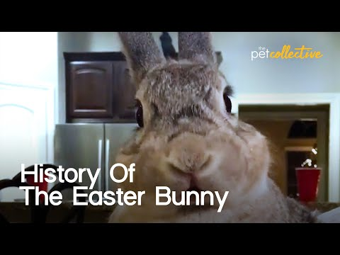 The Unusual History of the Easter Bunny