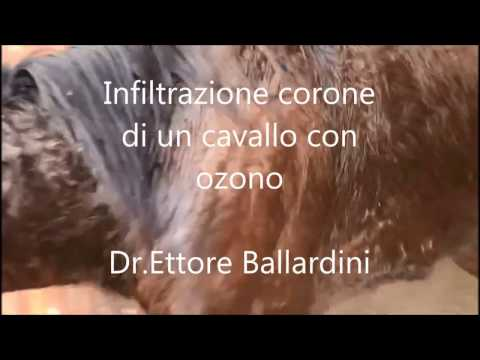 Emorroidi interne di unincrinatura di passaggio posteriore