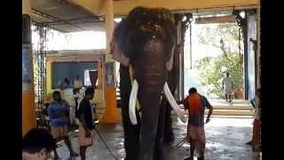 Elephants Head Lifting Peion Chirl Kalidasan Vs Thrikkadavoor Sivaraju S