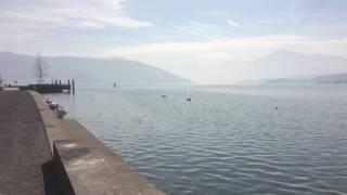 スイス発 ツーク湖の長閑な風景【スイス情報.com】