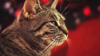 #97 Подборка видео с животными / #97 Best animals video compilation
