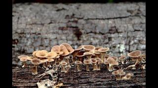 """""""Vocês não têm o conhecimento que temos sobre cogumelos"""""""