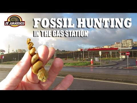 Fossil Hunting - In the Gas Station