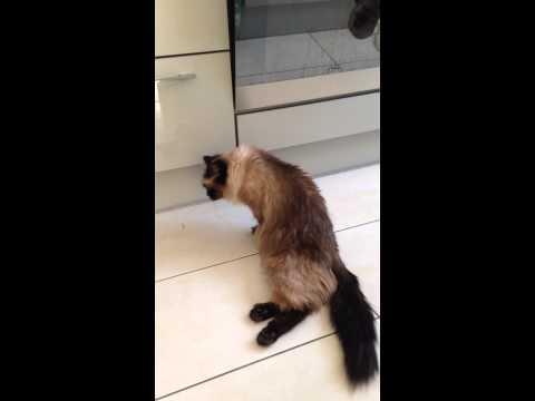 восстановление кошки с переломом позвоночника