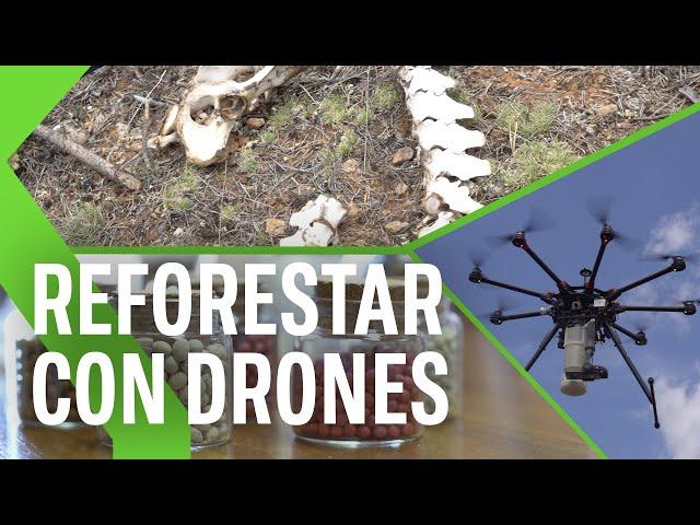9.000 árboles en apenas 10 minutos: así es como un dron puede ayudar en las labores de reforestación