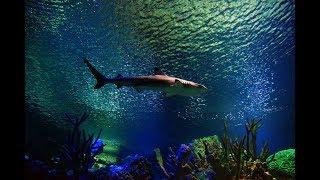 Санкт Петербург. Океанариум чисто рыбки)