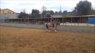 Finca Barroco,VK-Pferd,BUGATI Lusitano,6, Traumpferd ,VAQUERA UND! DRESSUR! geritten und gestartet!